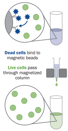 dead cell removal process