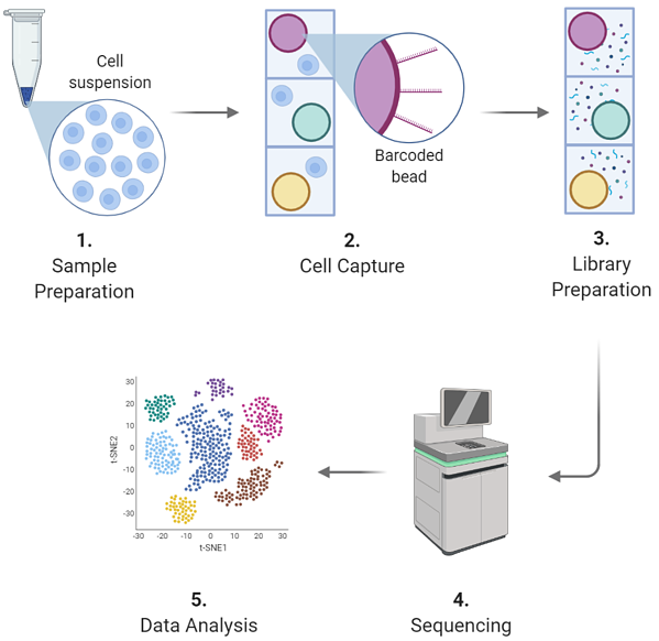 single-cell sequencing workflow