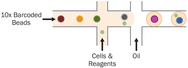 droplet encapsulation on 10x Genomics Chromium