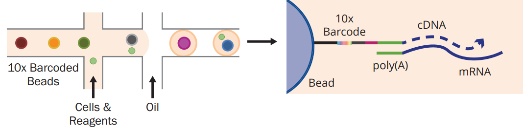 single-cell partitioning and library preparation